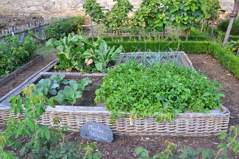 Mon potager - Cultiver mes relations comme un bon jardinier