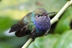 colibri - Coworking, le colibri
